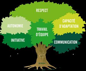 arbre_valeurs_fr